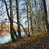 На берегу лесного озера :: Милешкин Владимир Алексеевич
