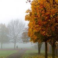 Золотая осень в тумане :: Дмитрий Сорокин