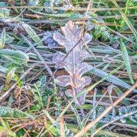 Чуется, видится близость зимы... :: Юлия Бабитко
