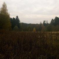 Осень :: Николай Дони