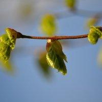 Весна :: Christine Chuprakova