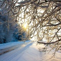 Зима и солнце. :: Александр Пчельников
