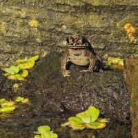 у жабы жабо :: Александр