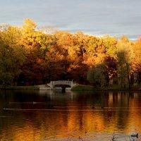 Золотая осень :: Елена Четверик