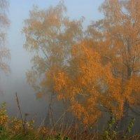 Осень. :: Виталий Внимательный.