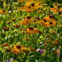 Цветы в нашем саду (этюд 15) :: Константин Жирнов