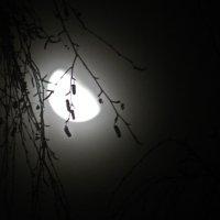 Ночь :: Марина Жилякова