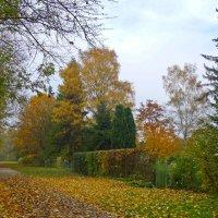 Осени краса ! :: Galina Dzubina