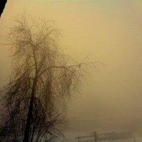 Сорока в тумане :) :: Милла Корн