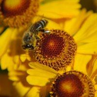 Цветы в нашем саду (этюд 19) :: Константин Жирнов