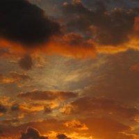 Чайка на закате :: valeriy khlopunov