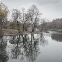 Поздняя осень на пруду :: Михаил Онипенко