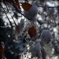 """Осенние """"люстры"""" под снегом :: Асылбек Айманов"""