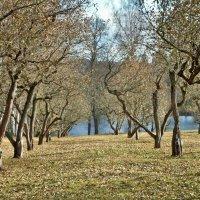 Яблоневый сад :: Тимофей Еременко