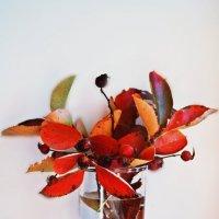 Осень в стакане... :: Надежда