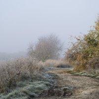 туман :: Olena