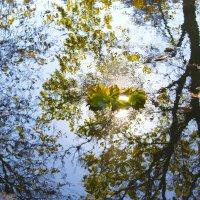 Осенний венок :: Ard Vin