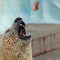 Из жизни одного медведя... :: Владимир Габов