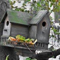 Птичий домик :: Анастасия Смирнова
