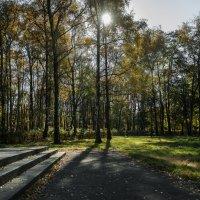 осень в парке :: Батик Табуев