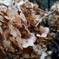 Осенние цветы :: Наталья Нарсеева