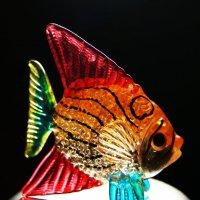 Подарок с Красного моря :: Galina Belugina