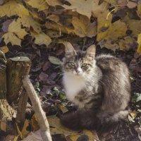Осенняя киса :: Aнна Зарубина