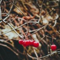 Осень ♥ :: Tanya Kozlova