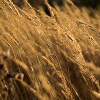 Поле моё поле... :: Fotochka Я