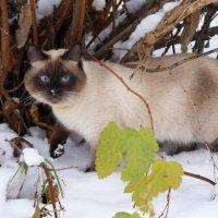 Интересно, чем снег пахнет? :: Галина Татьяныч