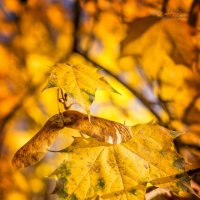 Ноябрьские краски :: Виктория Камышникова
