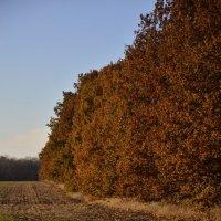 Глубокая осень.Ноябрь. :: Катерина Некрасова