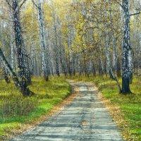 Дорога в Заповедник :: Светлана Игнатьева