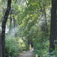 Тропинка в лесу :: Дмитрий Максимовский