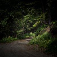 тропинка в лес :: Наталья Литвинчук