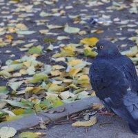 Осенняя птица :: Дмитрий Максимовский