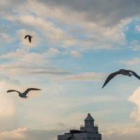 Чайки :: Алена Потураева