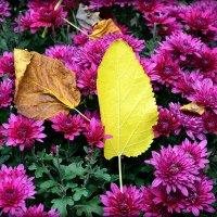 Листья на цветочном пляжу :: Асылбек Айманов