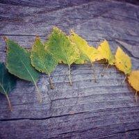 Осень меняет краски :: Svetlanka S