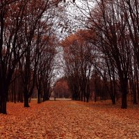 Один на один с осенью.2. :: Ирина Сивовол