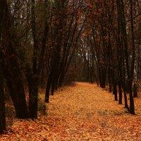 Наедине с осенью. 4. :: Ирина Сивовол