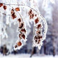 Признак зимы :: Анатолий Иргл