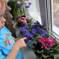 Прививаем любовь к растениям . :: Мила Бовкун
