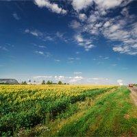 Вид на поле с подсолнухами :: Павел Корнеев