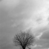 Одинокое древо :: Константин Сафронов