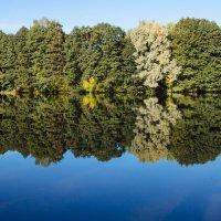 Trees along the river bank :: Никола Н
