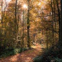 Дорога в осень :: Viktor Schnell