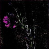 Петуния во мраке :: Нина Корешкова