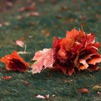 Холодная осень. :: Анастасия Мирошина