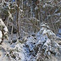 первый снег :: Владимир Артюхов